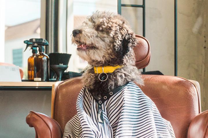 Groomer - fryzjer dla psa i kota